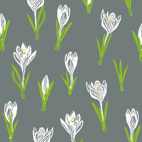 white crocuses on cool grey