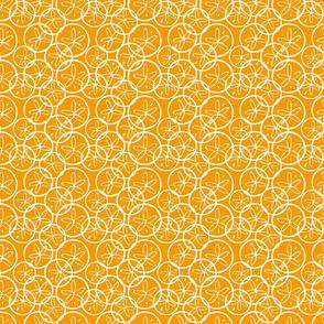 Orange Sand dollars