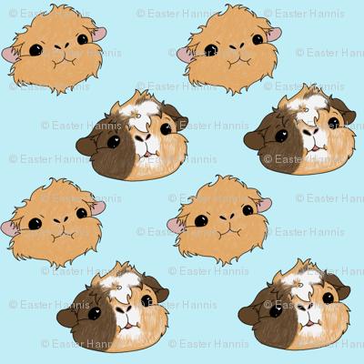 My little guineas