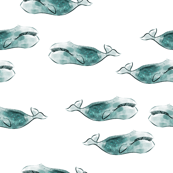 aqua whales
