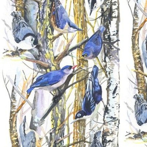 Nuthatch Forest