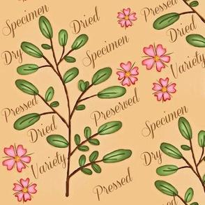 Specimen Antique Ground / pink pressed flowers