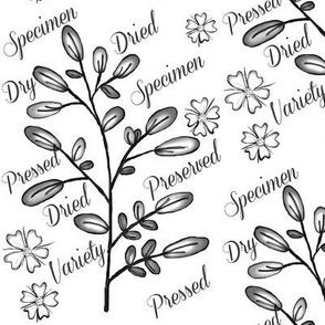 Specimen / Black & White