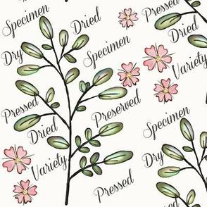 Specimen / pastel on whites