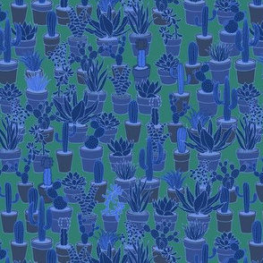 Succulents - blue and green