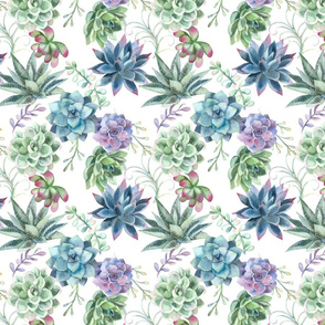 Watercolor Succulent Echeveria