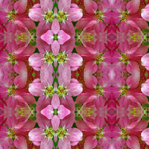 Symmagery Crabapple Blossum