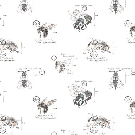 Rrrbee-species_shop_preview