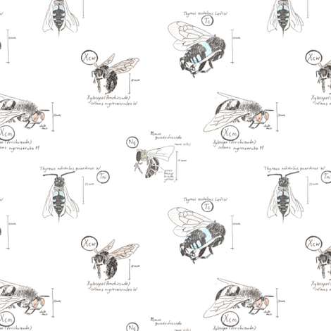 Bee species fabric by zandloopster on Spoonflower - custom fabric