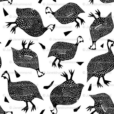 Giddy Guinea Fowl