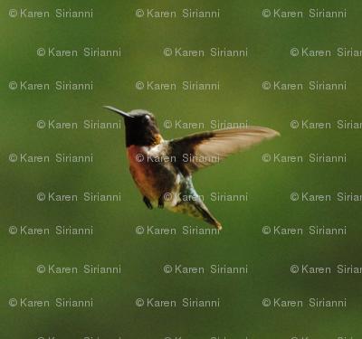 hummingbirdcrop2
