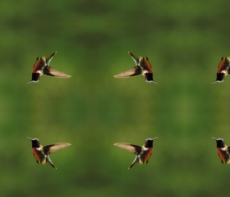 hummingbirdcrop2 fabric by onthebrink on Spoonflower - custom fabric
