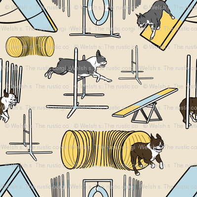 Simple Boston Terrier agility dogs - small tan