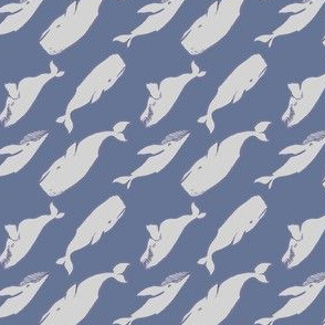 whales blue and gray