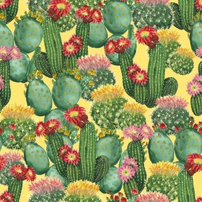 cactuses on yellow