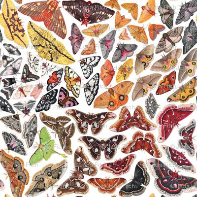 Saturniid Moths of North America