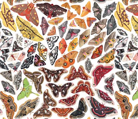 Saturniid Moths of North America fabric by jadafitch on Spoonflower - custom fabric