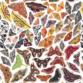 Rsaturniid-pattern-square-150_shop_thumb