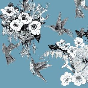 Slate, White & Gray Humming Bird