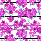 Purple Geraniums with black stripes