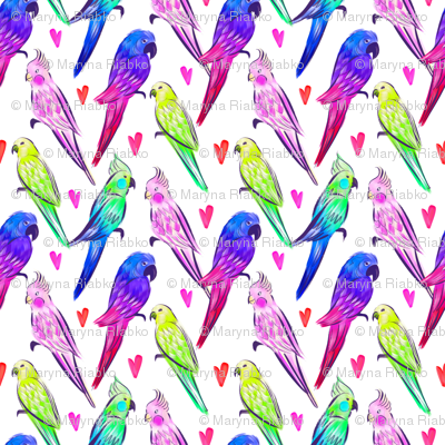 Parrot`s Love