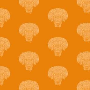 Orange Golden Retriever