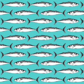 mackerel (small)