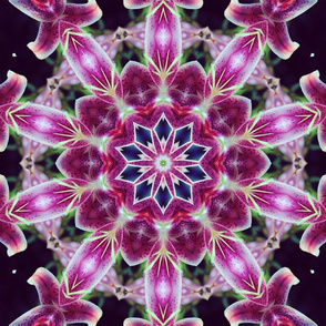 Star Gazer Lily kaleidoscope