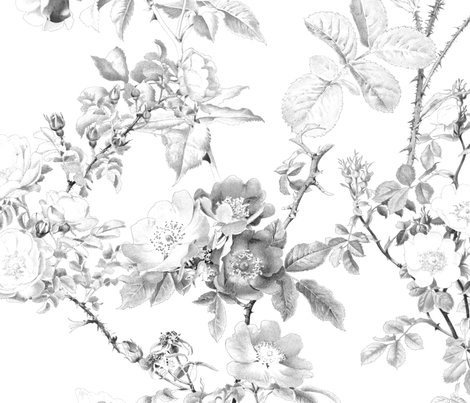 English-rose-watercolor-black-and-white-peacoquette-designs-copyright-2018_shop_preview