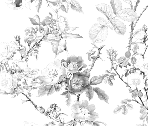 English Rose ~ Watercolor ~ Black and White   fabric by peacoquettedesigns on Spoonflower - custom fabric