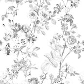 English-rose-watercolor-black-and-white-peacoquette-designs-copyright-2018_shop_thumb