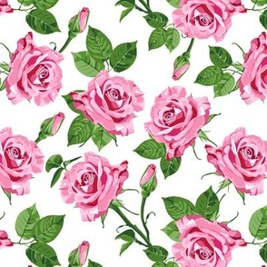 Pink roses on the white background