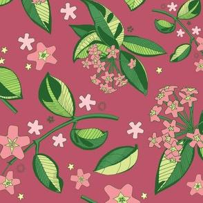 Wax Plant Floral / Dark Pink