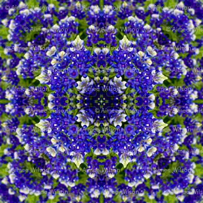 Texas Bluebonnet Remix