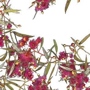 Eucalyptus leucoxylon rosea –Wall Trellis