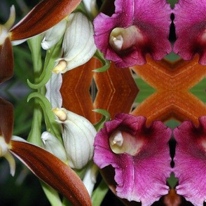Symmagery Maroon Orchid