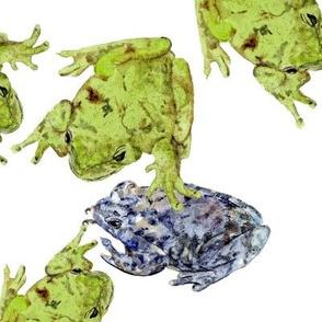 Frisky Frogs