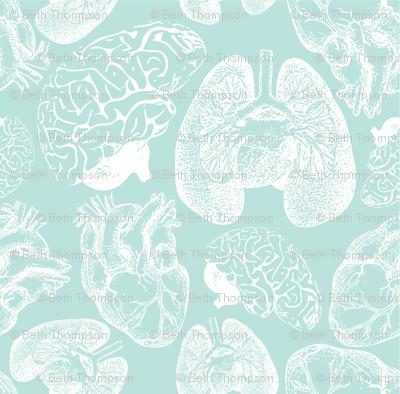 Anatomical Organ Variety in White on Seafoam Medium