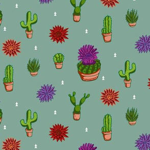 Colorful Cacti and Desert Plants