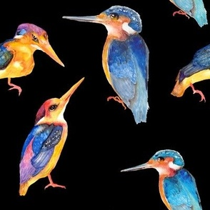 watercolor kingfisher birds on black
