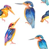 Rrwatercolor-kingfisher-birds-on-white-by-paysmage_shop_thumb