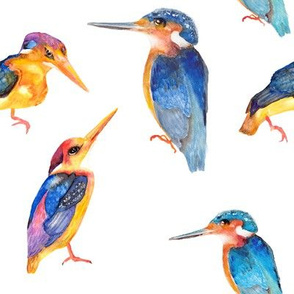 watercolor painted kingfisher birds on white