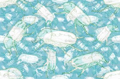 crawly beetles in aqua