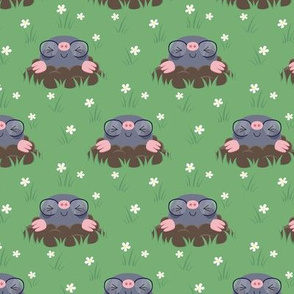 Cute little moles