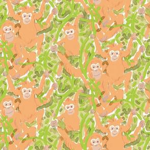 Orangutan Family 2