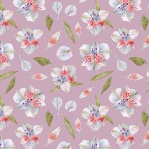 pink alstroemeria flowers