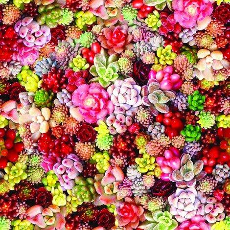 Rrrsucculents-colourful_shop_preview