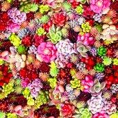 Rrrsucculents-colourful_shop_thumb
