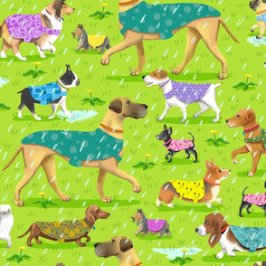 Raincoat Dogs