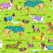 Rrrrrrrrraincoat-dogs_001adj3_shop_thumb
